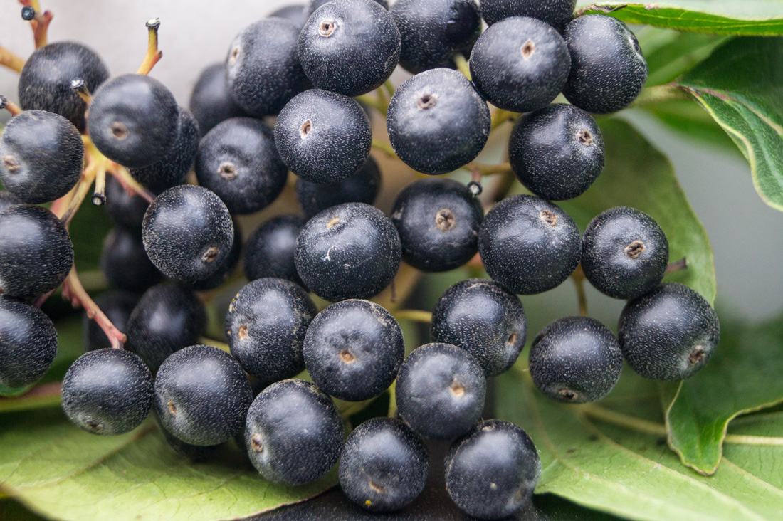 good quality berries image